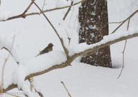 吹雪の朝の野鳥さん - My favorite ~Diary 3~