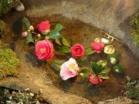 『フラワーパーク江南 椿の世界展』 - 自然風の自然風だより