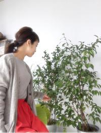 緑 - rie blog