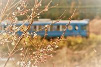 つぼみ膨らむ - 今日も丹後鉄道