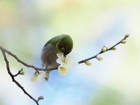 久々のUPです (^_^)/ - 気ままな野鳥観察