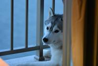 冬三番みたいな(≧∇≦) - 犬連れへんろ*二人と一匹のはなし*