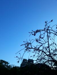 熊本城~♪ - 青い海と空を追いかけて。