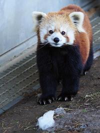 2月19日(日) 縁 - ほのぼの動物写真日記