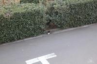 【猫】逃走中 - 人生を楽しくイきましょう!