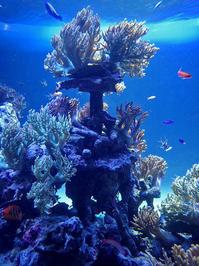 サンシャイン水族館~「サンゴ礁の海」 - 続々・動物園ありマス。