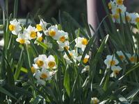 花の寺 - ねこ飛び出し注意