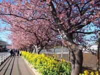 三浦半島をドライブ - ひつじのお散歩