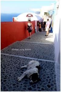 GREECE 2009  ④ Santorini - Chaton の ひとりごと