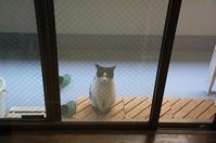 最近の猫事情9 - 鳥会えず猫生活