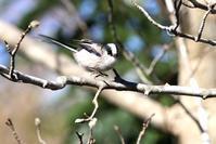 花木絡みの野鳥たち - 野山の住認たちⅡ