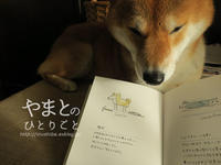 犬の本 【ゆる犬図鑑】 - yamatoのひとりごと