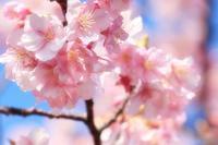 春の調べ♪ - happy-cafe*vol.2