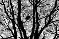 ボクもニコン応援団〜A Nest〜 - ライカとボクと、時々、ニコン。