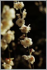 小石川後楽園 -13 - Camellia-shige Gallery 2
