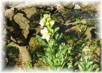 ☆ 庭は春 ♬ - ニットルームpiko