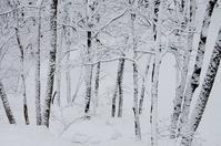吹雪に耐えて - 自然と仲良くなれたらいいな2