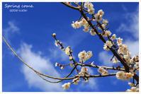 春よ来い - GOOD LUCK!