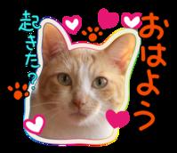 密かなたくらみ - ぎんネコ☆はうす
