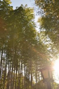 修善寺の旅4~竹林と温泉と終わり~ - 想い出