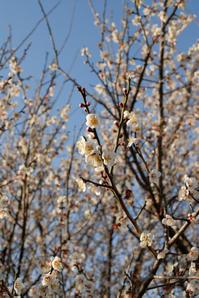 もうすぐ春ですね! - pottering