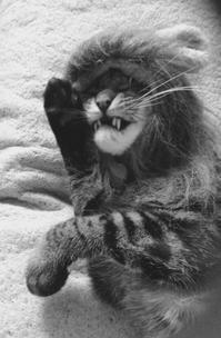 《トラちゃん占いは毎月1日》2月20日・地震体感と検証 - 猫丸ねずみの大荒れトーク