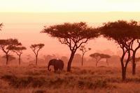 象と日の出。そしてチーターと90分にわたるご対面(旅記録その11、2月19日のサファリ) - 旅プラスの日記
