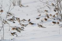 真冬の食糧は・・・・・・・ - カシャカシャblog