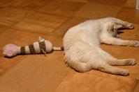 寝猫18 - オムイと森羅万象