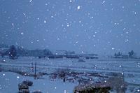 【よりみち編】雪降りの朝 - 長岡・夢いっぱい公園