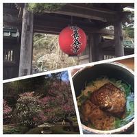 鎌倉 長谷寺、御霊神社 - 瑠璃色の庭