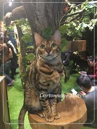 猫カフェ - 働くママのカルトナージュ時間