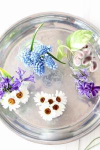 春の花たち - ゆきなそう  猫とガーデニングの日記