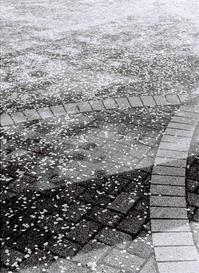 """春、先取りし過ぎ!?     ~忘れ去られたフィルムから - """"そむひの""""家 の Photo Life"""