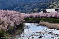 満開の河津桜 - A partir d'une seule piece  カルトナージュで私だけの空間創り
