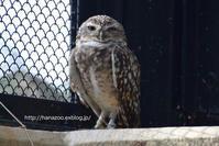 優しい表情の動物たち@のいち動物公園 - 今日ものんびり動物園