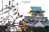 大阪城公園の梅 - 4にゃん日記+