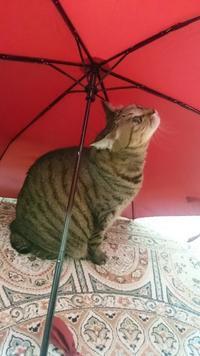 傘の下 - チェリーちゃんねる  第2章