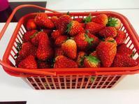 お久しぶりのイチゴ - shikahanbaiのblog