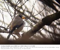 川越市・入間川河川敷 2017.2.18(2) - 鳥撮り遊び