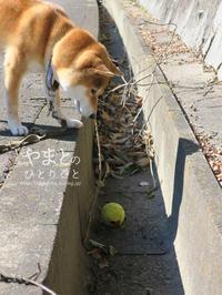 あなたの犬ならどうしますか? 【動画あり】 - yamatoのひとりごと