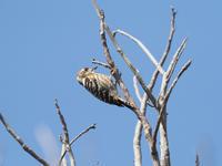 新しいカメラで・・・ - cuccooの野鳥エトセトラ