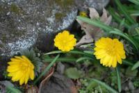 春がそこまでやってきた。「肖像画の益子」 - 肖像画の益子