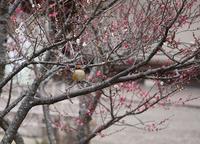 万願寺の森で探鳥会 2017/01/31 - 万願寺通信