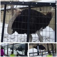 旭山動物園でランチ:雪の村 - 気ままな食いしん坊日記2