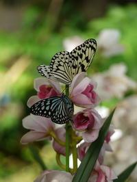伊丹市昆虫館の蝶 - ぶらり休暇
