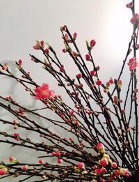 ひな祭りフェア - ~ Flower Shop D.STYLE ~ (新所沢パルコ・Let's館1F)
