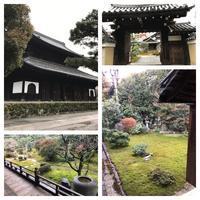 京都八日目 - ソラネコ写真館