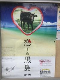 恋する黒島 - 西表島の石やんのあれやこれや