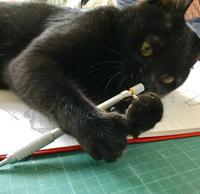 うち猫通信 - 「にゃん」の針しごと